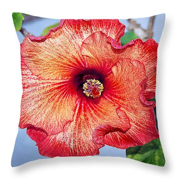 Hibiscus - Mahogany Star Flower Throw Pillow by Donna Proctor