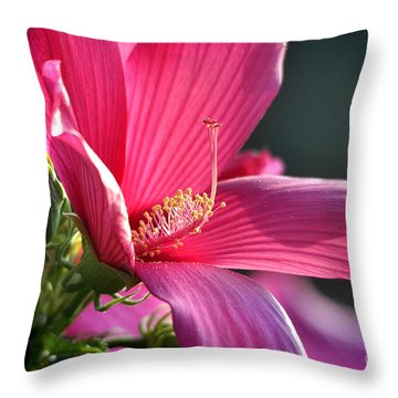 Throw Pillow featuring the photograph Hibiscus Morning Bright by Nava Thompson