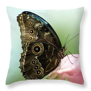 Throw Pillow featuring the photograph Hidden Beauty Of The Butterfly by Debbie Green