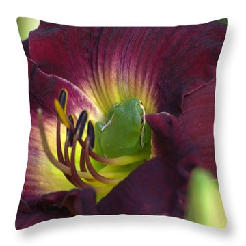 Hidden Treasures Throw Pillow by Jodi Terracina