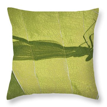 Hide And Seek Dragon..fly  Throw Pillow by Tammy Schneider