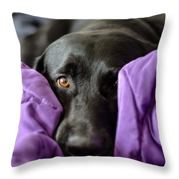Hide And Seek Throw Pillow by Randy Scherkenbach