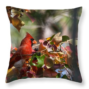 Hiding Away Throw Pillow by Linda Unger