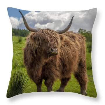 High Know Brown Cow Throw Pillow
