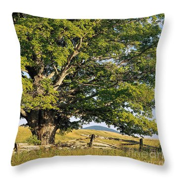 Throw Pillow featuring the photograph High Summer by Alan L Graham