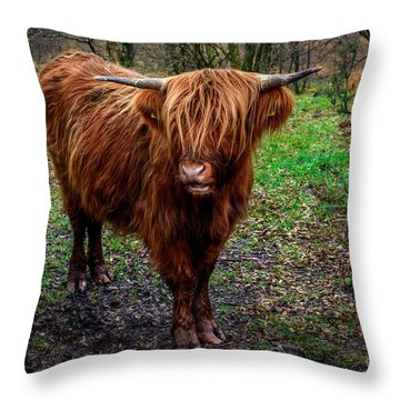 Highland Beast  Throw Pillow by Adrian Evans