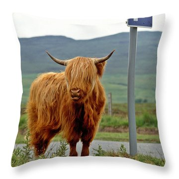 Highland Cow Throw Pillow by David Davies