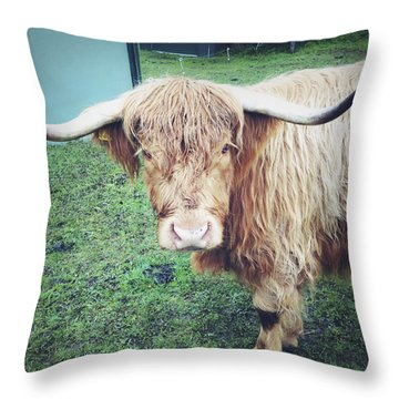 Highland Cow Throw Pillow by Les Cunliffe