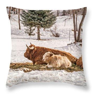 Highland Cow With Calves Throw Pillow