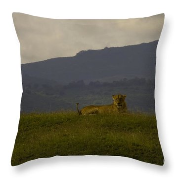 Throw Pillow featuring the photograph Hillside Lions by J L Woody Wooden