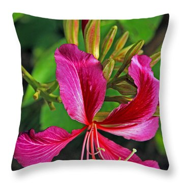 Hong Kong Orchid Tree Single And Buds Throw Pillow