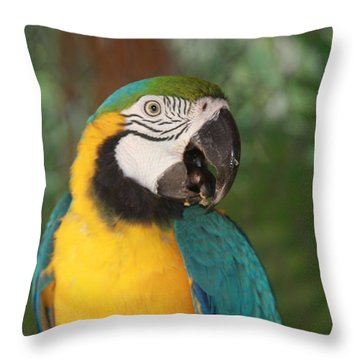 Throw Pillow featuring the photograph Hola by Vadim Levin