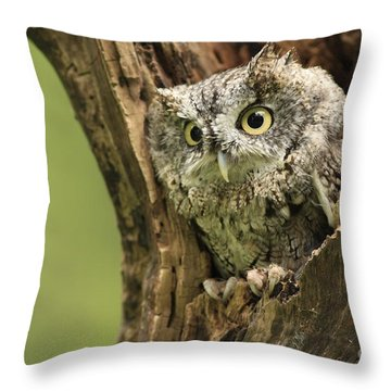 Hollow Screech- Eastern Screech Owl Throw Pillow by Inspired Nature Photography Fine Art Photography