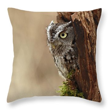 Home Sweet Home - Eastern Screech Owl In A Hollow Tree Throw Pillow by Inspired Nature Photography Fine Art Photography
