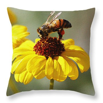 Honey Bee And Brittle Bush Flower Throw Pillow