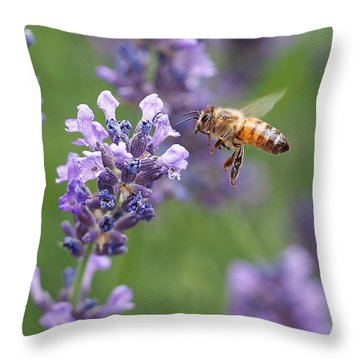 Honey Bee And Lavender Throw Pillow by Rona Black