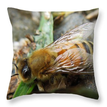 Throw Pillow featuring the photograph Honey Bee by Pete Trenholm