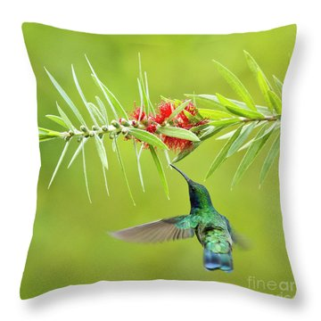 Honey Sucking Throw Pillow