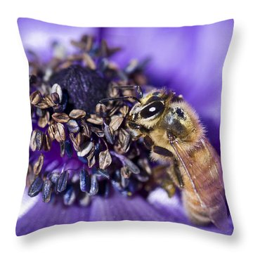 Honeybee And Anemone  Throw Pillow by Priya Ghose