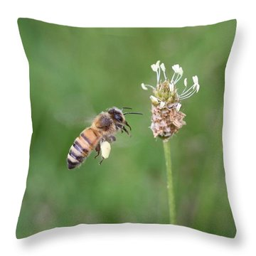 Honeybee And English Plantain Throw Pillow by Lucinda VanVleck