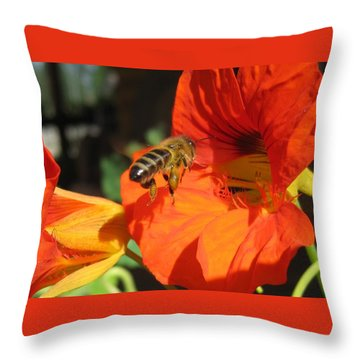 Honeybee Entering Nasturtium Throw Pillow by Lucinda VanVleck