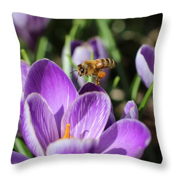 Honeybee Flying Over Crocus Throw Pillow by Lucinda VanVleck