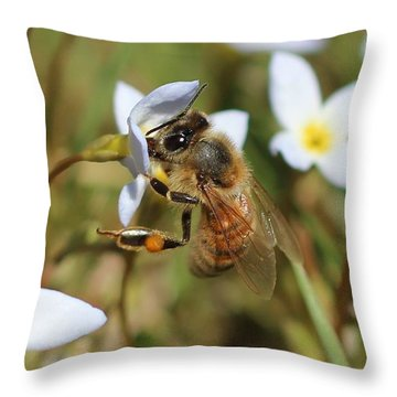 Honeybee On Bluet Throw Pillow by Lucinda VanVleck