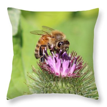 Honeybee On Burdock Throw Pillow by Lucinda VanVleck