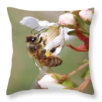 Honeybee On Cherry Blossom Throw Pillow by Lucinda VanVleck
