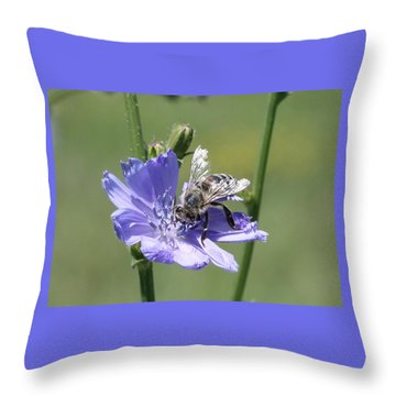 honeybee on Chickory Throw Pillow by Lucinda VanVleck