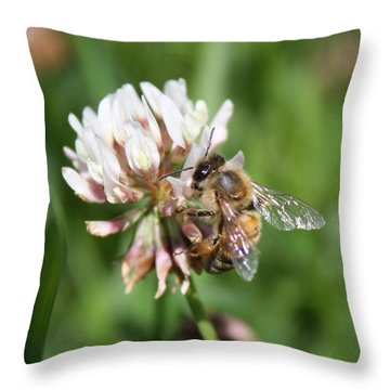 Honeybee On Clover Throw Pillow by Lucinda VanVleck
