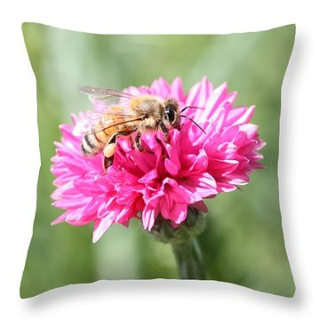 Honeybee On Pink Bachelor's Button Throw Pillow by Lucinda VanVleck