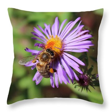 Honeybee On Purple Wild Aster Throw Pillow by Lucinda VanVleck