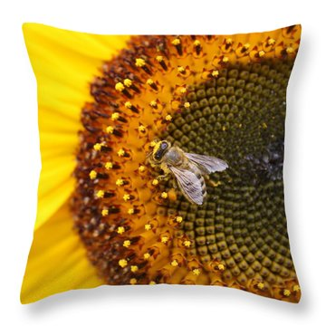 Honeybee On Sunflower Throw Pillow by Lucinda VanVleck