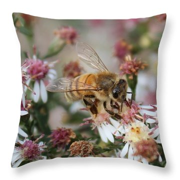 Honeybee Sipping Nectar On Wild Aster Throw Pillow by Lucinda VanVleck