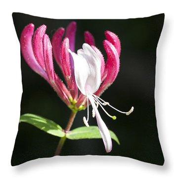 Honeysuckle Throw Pillow by Richard Thomas