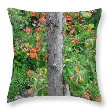 Throw Pillow featuring the photograph Honeysuckle's Friend by Brenda Brown