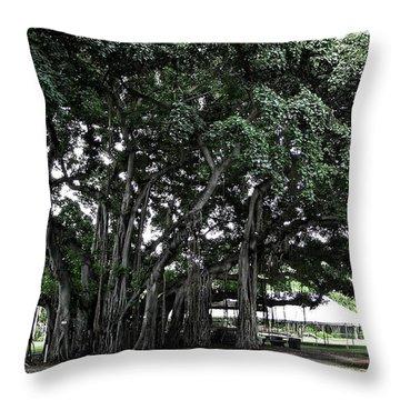 Honolulu Banyan Tree Throw Pillow by Daniel Hagerman