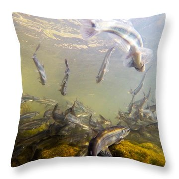 Hooligan Underwater Throw Pillow