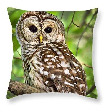Hoot Owl Throw Pillow by Christina Rollo