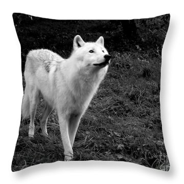 Throw Pillow featuring the photograph Hopeful by Vicki Spindler