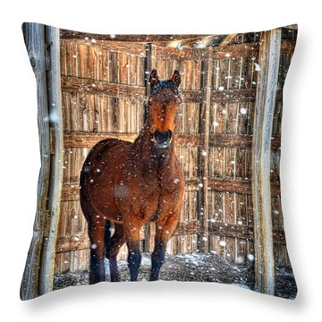 Horse And Snow Storm Throw Pillow by Dan Friend