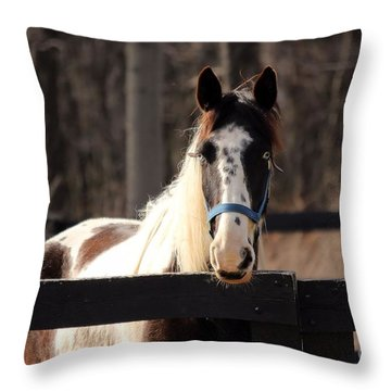 Horse At The Gate Throw Pillow