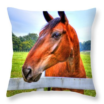 Throw Pillow featuring the photograph Horse Closeup by Jonny D