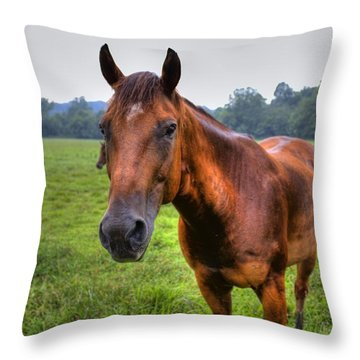 Horse In A Field Throw Pillow