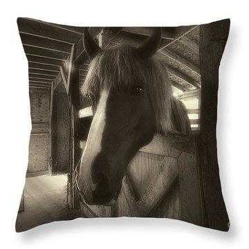 Horse In Barn Stall Throw Pillow by Dan Friend