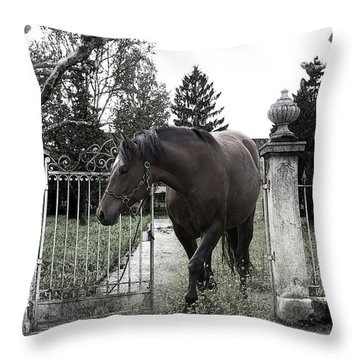 Horse In Europe Throw Pillow by Christine Sponchia