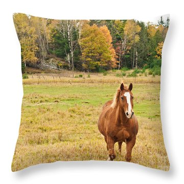 Horse In Field-fall Throw Pillow