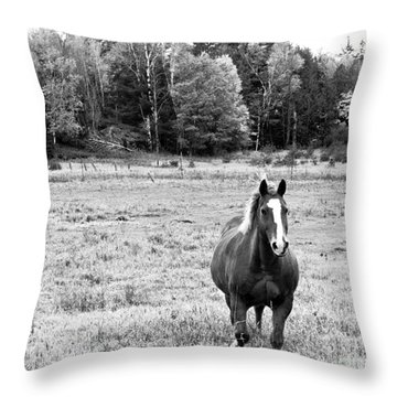 Horse In Field In Black And White Throw Pillow