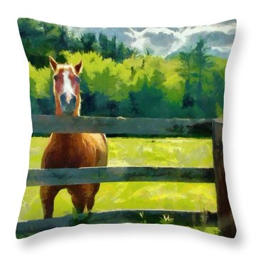 Horse In The Field Throw Pillow by Jeff Kolker